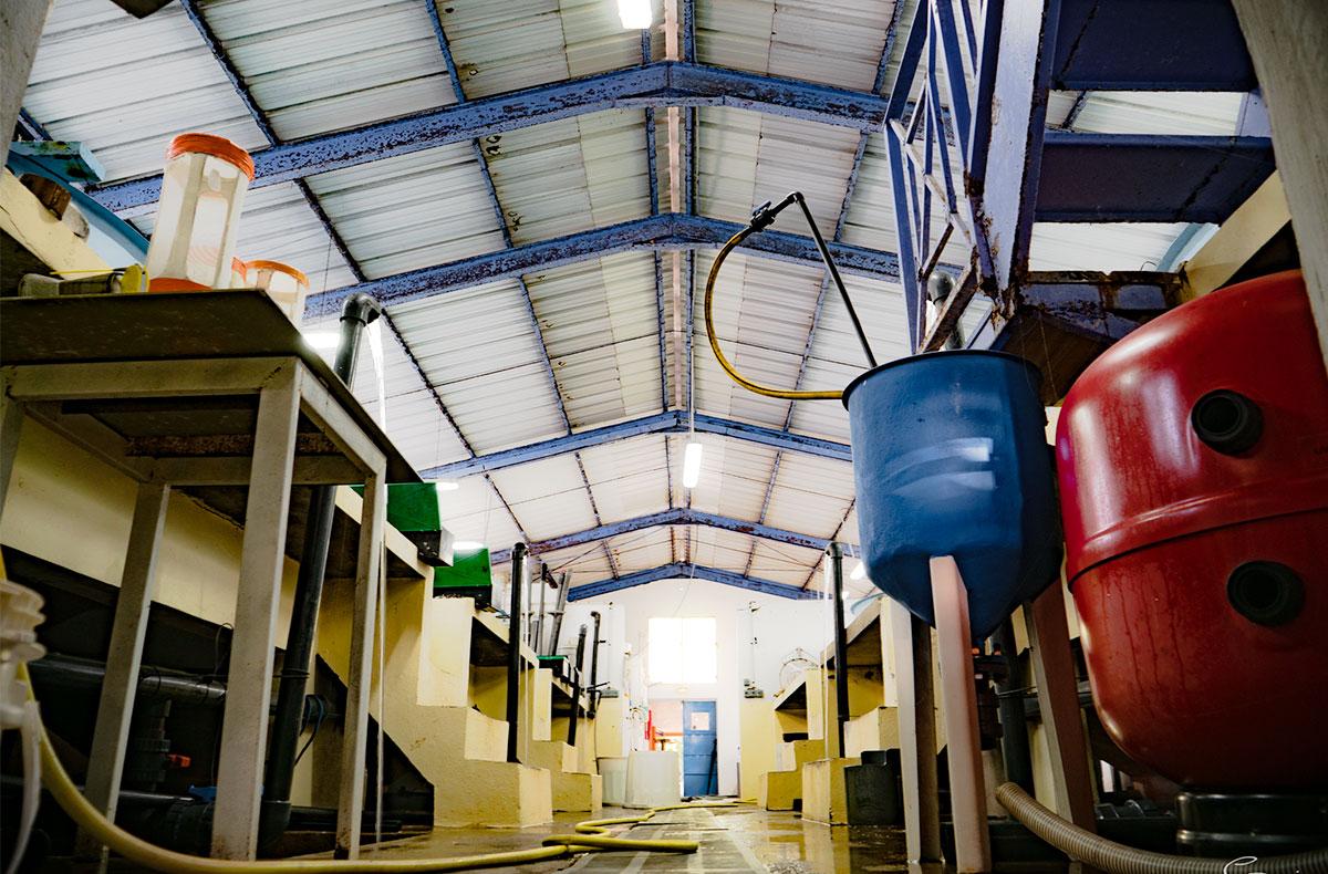 Vue de l'intérieur de l'écloserie de Guadeloupe